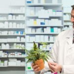Uruguay's pharmacies got the permission to sell recreational cannabis