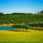 Agriculture exchange between Uruguay and Falklands